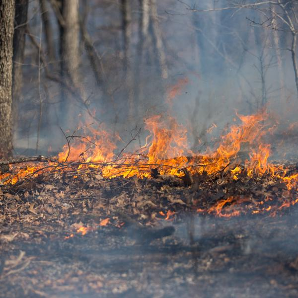 Hot topic: Fire and biodiversity in the Missouri Ozarks