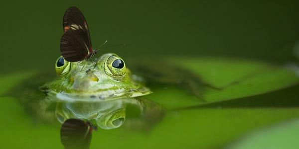 Frog with a butterfly on its head